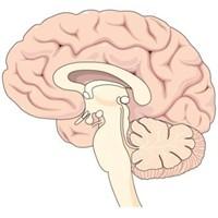 Beyini Ve Hafızayı Güçlendiren Besinler