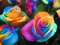 Renklerin Terapisi