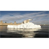Kutup Ayıları Birbirini Yiyor