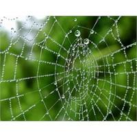 Örümcek Ağı Gibi İnternet