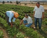 Türkiye Organik Tarımda Şanslı