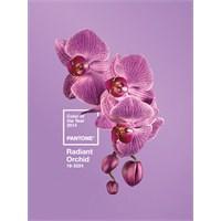 Pantone 2014 Yılının Rengi: Parlak Orkide