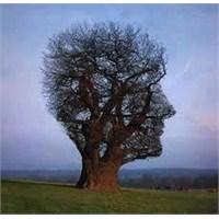 Hangi Ağaç, Neyi Anlatıyor ?