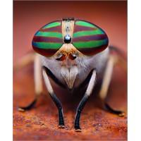 Böcek Portre Fotoğraflari...