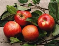 Elma Sirkesinin Bütün Faydaları Sağlık Ve Güzellik