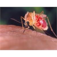 Sivrisinekler Kimi İsırır,kimi İsırmaz?