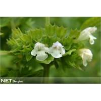 Şifalı Bitkiler Doğal Sağlık Veriyor