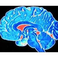 İnsan Beyni Kaç Yaşında Olgunlaşıyor?