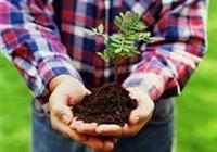 Yılbaşında Sevdiklerinize 7 Ağaç Armağan Edin