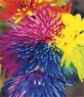 Renklerin Tedavi Edici Özellikleri
