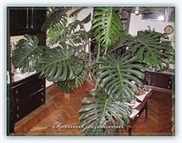 Hava Temizleyen Ev Bitkileri