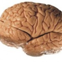 Daha Az Beyin Felci
