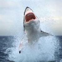 Kireçlenmeye Karşı Köpek Balığı Kıkırdağı