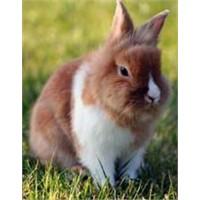 Evcil hayvan bakım rehberi: minikler