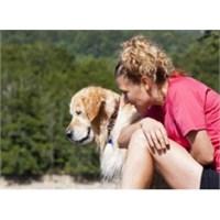 Köpek İle Gelen Sağlık