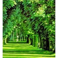 Bu Orman 300 Milyon Yaşında