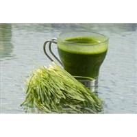 Doktorum Programı Gençleştiren Buğday Çimi Suyu