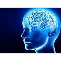 Hafızayı Güçlendiren 4 Besin