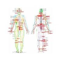 Meridyenler Ve Akupunktur Noktaları