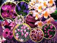 Çiçekler Ve Anlamları