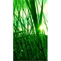 Bu Güne Özel İphone 5 Duvar Kağıtları 30/10/2012