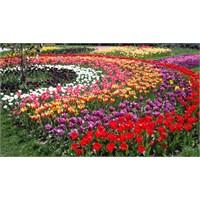 Bitkilerden Mucizevi Yağlar Ve Kremler