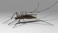 Uzaydan Gelen Sivrisinek!