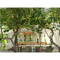 Kos'ta Theodorou Beach Restaurant & Bar Aydınlatma