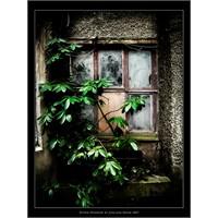 Sözün Penceresinden Hayat