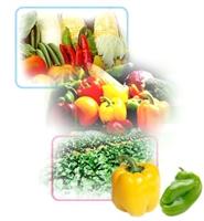 Organik Tarım Ve Gdo Hakkında