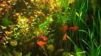 Aquarium Real Life 23 Screensaver Gerçek Akvaryum