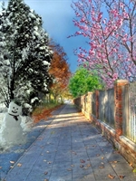 Bu Resimlerde 4 Mevsim 1 Arada