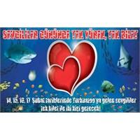 Bu Yıl Sevgililer Günü'nü Turkuazoo'da Unutulmaz H