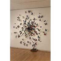 Evde Uçuşan Kelebekler