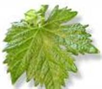 Asma Yaprağı İle Alkolü Bırakma Formülü