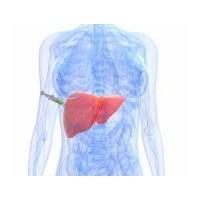 Karaciğer Yağlanmasına Dikkat!