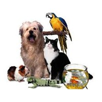 Çocuğunuza Evcil Hayvan Seçimi