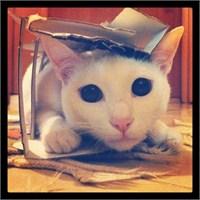 Kediler İçin Evde Mama Yapımı