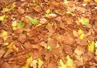 Siz De Sonbaharda Hüzünlenenlerden Misiniz?