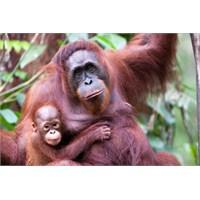 Borneo'nun Kalbi'nde 123 Yeni Tür