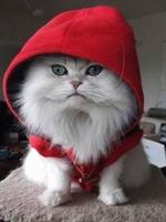 Her Detayda Kırmızı Giymenin Kuralları