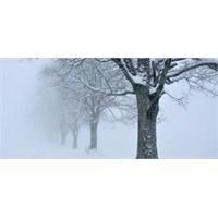 Kar Ve Sis Fotoğrafçılığı