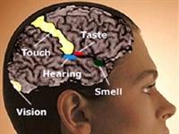 Duygunun Merkezi Kalp Mi, Beyin Mi  ?