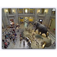 Amerikan Doğa Tarihi Müzesi - Washington