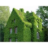 Yeşil Cepheler- Dikey Bahçeler