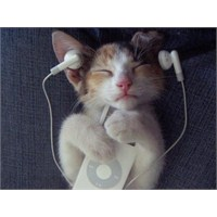 Güzel Müzik, Güzel Gün