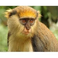 Maymunların İletişim Yolları