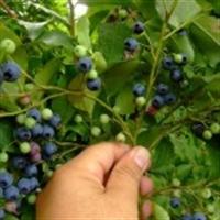 Şifa Dağıtan, Hastalıkları Tedavi Eden Bitkiler