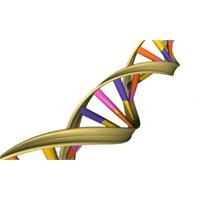 Amazon 1000 Genom Projesi