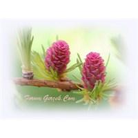 Bach Çiçek Terapisi Nedir?